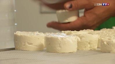 A la découverte d'un fromage de chèvre exceptionnel au Pays basque