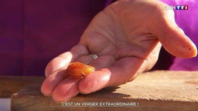 A la découverte d'un verger extraordinaire à Manosque