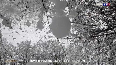 À la découverte d'une des dernières forêts primaires d'Europe en Bosnie-Herzégovine