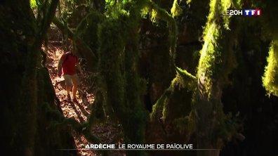 À la découverte de la forêt de Païolive en Ardèche