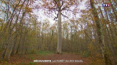 À la découverte de la forêt de Tronçais