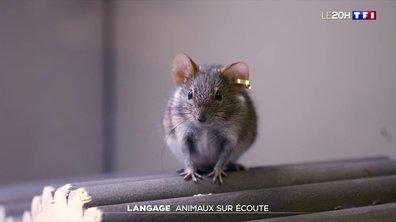 À la découverte de la langage des animaux