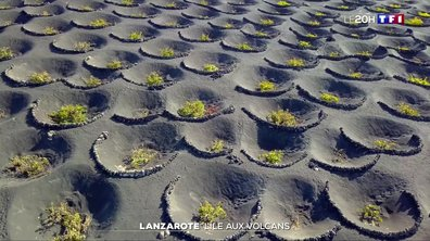 À la découverte de Lanzarote, l'île aux volcans