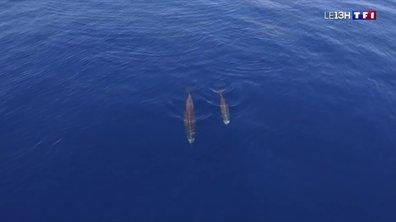 A la découverte de Madère, sanctuaire des baleines