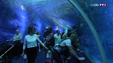 A la découverte de Nausicaa, le plus grand aquarium d'Europe