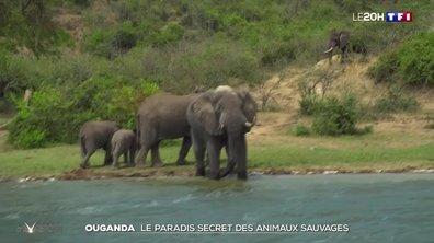 À la découverte des animaux du parc Queen Elizabeth en Ouganda