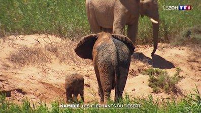 À la découverte des éléphants du désert de Namibie