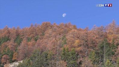 À la découverte des forêts de mélèzes dans les Alpes-de-Haute-Provence