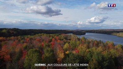 À la découverte des forêts du Québec, aux couleurs de l'été indien