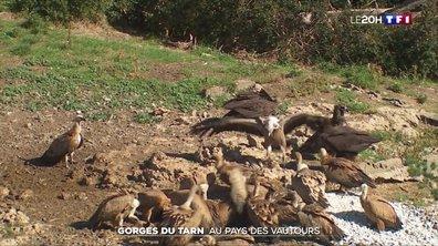 À la découverte des gorges du Tarn et de la Jonte, le pays des vautours