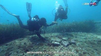 À la découverte des jardiniers du corail