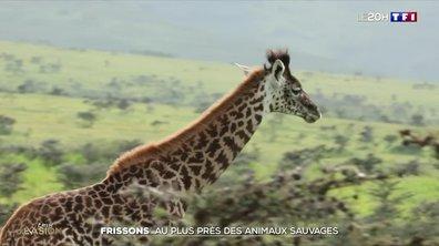 A la découverte des plus beaux animaux d'Afrique