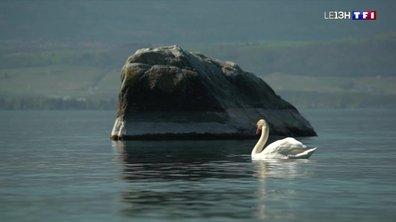 A la découverte du lac Léman
