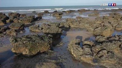 À la découverte du littoral des Hauts-de-France : balade de Brédune à la baie de Somme