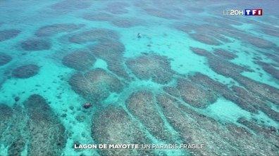 À la découverte du plus grand lagon de l'océan Indien à Mayotte