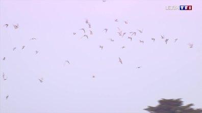 À la rencontre des oiseaux migrateurs dans le golfe du Morbihan