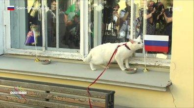 Achille, le chat oracle de la Coupe du monde 2018