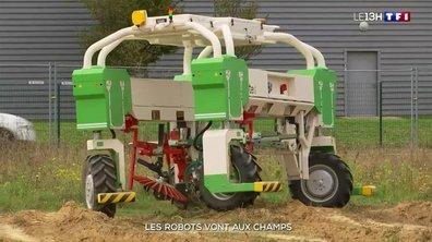 Agriculture : des robots dans les champs