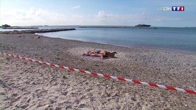 Algues vertes : drapeaux rouges sur les plages de Saint-Laurent-du-Var