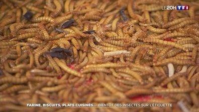 """Alimentation : bientôt des """"vers de farine"""" dans nos assiettes"""