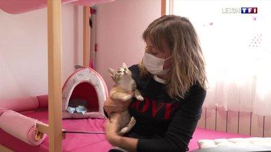 Animaux de compagnie : le confinement a donné des ailes aux adoptions