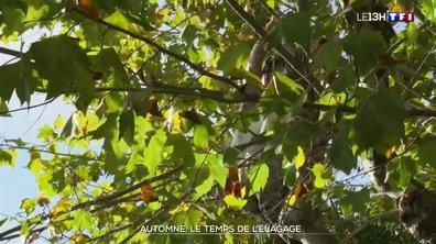 Après l'été, c'est l'heure de l'élagage des arbres en Provence