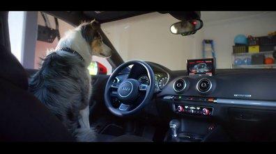 """Insolite : Laissez votre chien """"garer"""" votre Audi…"""
