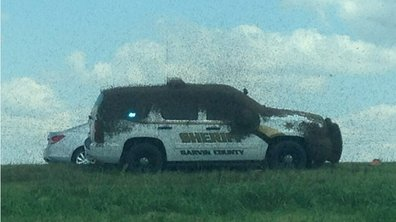 Insolite : Des abeilles attaquent une voiture de police