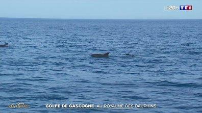 Balade au large du golfe de Gascogne, à la rencontre des dauphins globicéphales