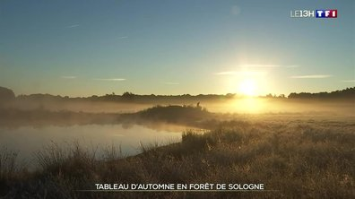 Balade automnale dans les forêts de Sologne