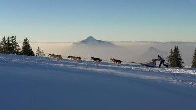 La course de chiens de traîneau dans les Alpes