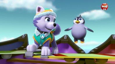 Le bébé pingouin - Paw Patrol, la Pat'Patrouille