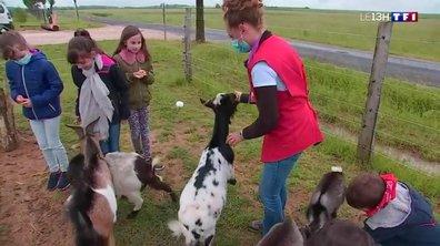 Bienvenue à la ferme : les exploitations agricoles ouvrent leurs portes