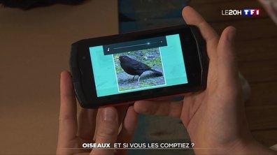BirdLab, l'appli pour devenir compteur d'oiseau