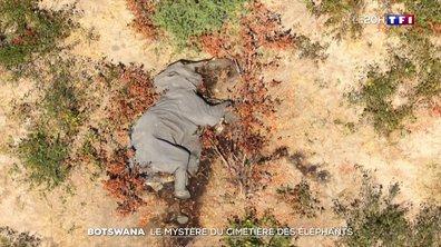 Botswana : mystère autour de la mort de 400 éléphants