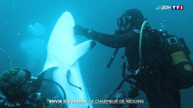 Ce Français dédie sa vie aux requins