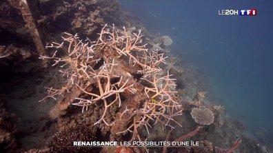 Ce Français tente de restaurer des coraux au large des Philippines