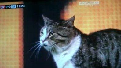 Insolite : un chat devient une star à Liverpool (vidéo)