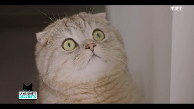 Les chats voient-ils vraiment les fantômes ?