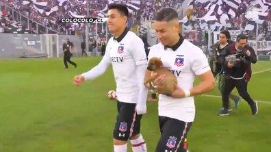 Ce club qui rentre sur le terrain ... avec des chiens