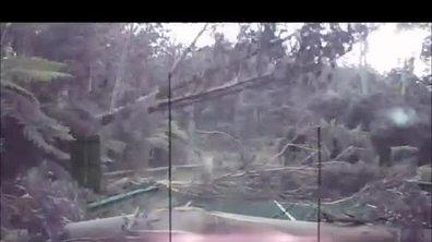 Insolite : Une pluie d'arbres sur une route australienne