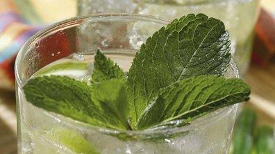 Cocktail : quelle est la recette du Mojito ?