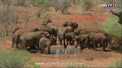Comment expliquer le baby-boom des éléphants au Kenya ?