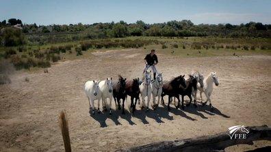 Communiquer avec les chevaux - Sponsorisé