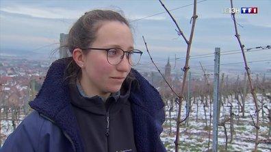 Compagnons du devoir : Doryne, apprentie vigneronne