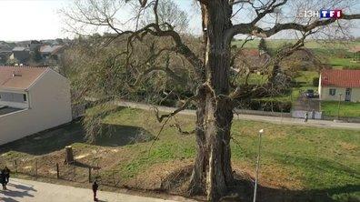 Concours du plus bel arbre de l'année : un village de la Marne grand gagnant