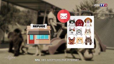 Confinement : la SPA propose une adoption par Internet