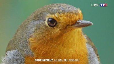 Confinement : le bal des oiseaux
