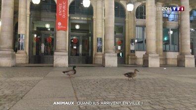 Confinement : les animaux à l'assaut des villes
