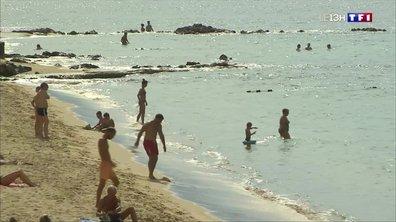 Corse : le marché d'Ajaccio, une valeur sûre pour les vacanciers
